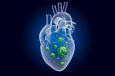 Herz mit Viren